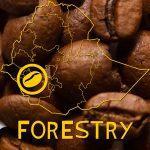 Forestry koffiebonen